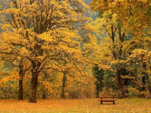 Beaux-arbres-dautomne-_-www.images-libres.net_2